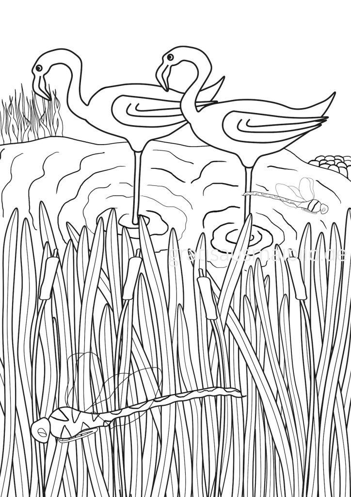 gratis Ausmalbilder Flamingo Schilf Libelle Wasser Ufer See gratisausmalbild.de